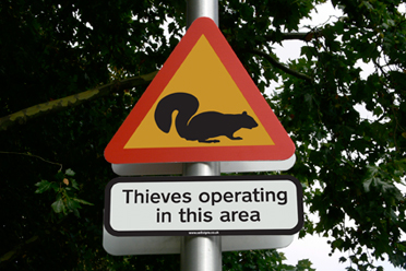 Thieves Operating In This Area